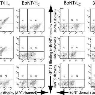 Amino acid sequence alignment of cross-serotype binding