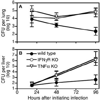 IFN- ␥ and TNF- ␣ control bacterial growth during humoral