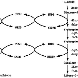 Pathways of ROS formation, the lipid peroxidation process