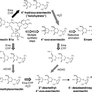 (Bio)synthetic conversions of avermectin. The white block