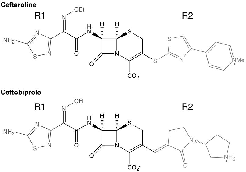 Chemical structures of the novel β-lactam antibiotics