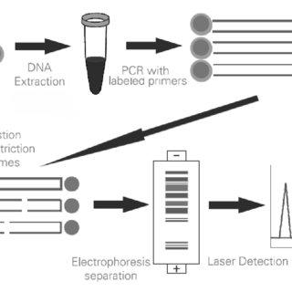 (PDF) Laboratory manual