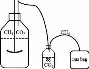 Schematic diagram of gas-bag-based measuring system.
