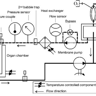Schematic representation of the machine perfusion system