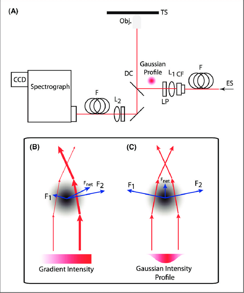 hight resolution of  a typical confocal microscope arrangement for point scanning raman download scientific diagram