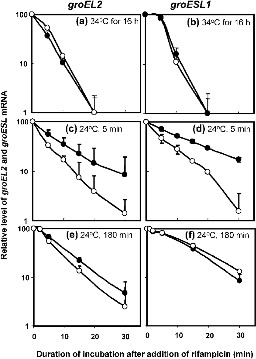hight resolution of effects of crhr mutation on the stability of groel2 transcript and download scientific diagram