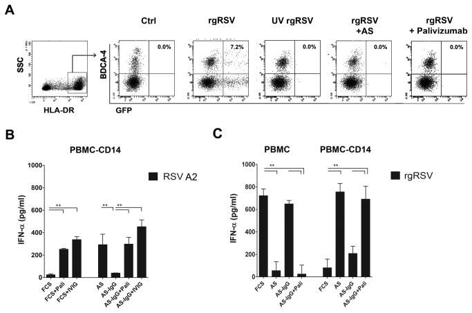 Respiratory Syncytial Virus Induced Type I IFN Production
