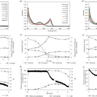 - In vitro transcription process for Semliki Forest virus