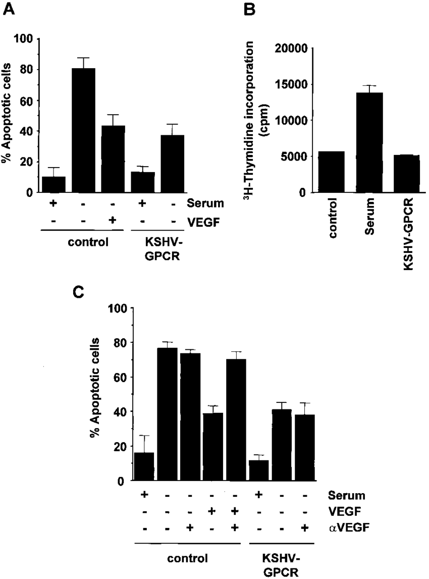 hight resolution of kshv gpcr induces cell survival in primary human endothelial cells a download scientific diagram