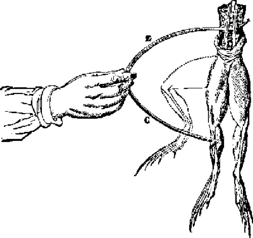 diagram for electrolytes