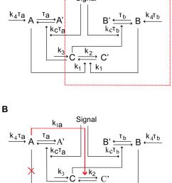 schematic diagrams of single positive loop positive positive loop and [ 850 x 1069 Pixel ]