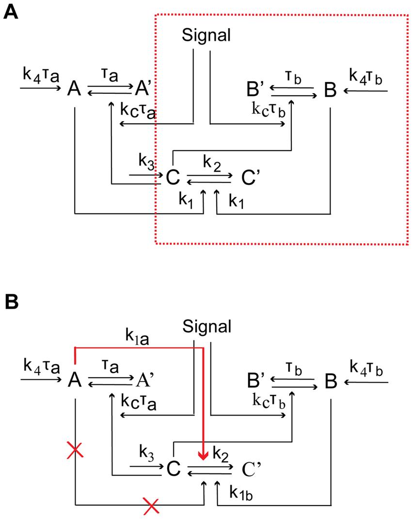 medium resolution of schematic diagrams of single positive loop positive positive loop and