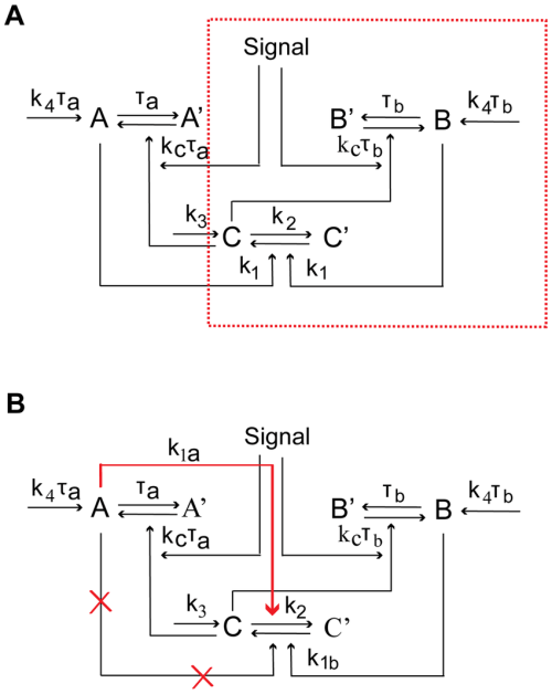 small resolution of schematic diagrams of single positive loop positive positive loop and