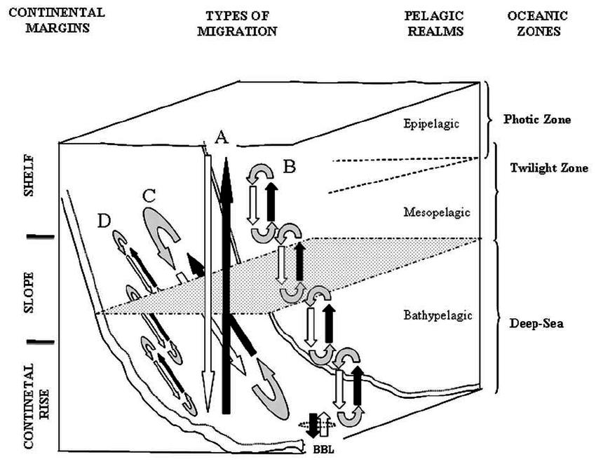 pelagic zone diagram