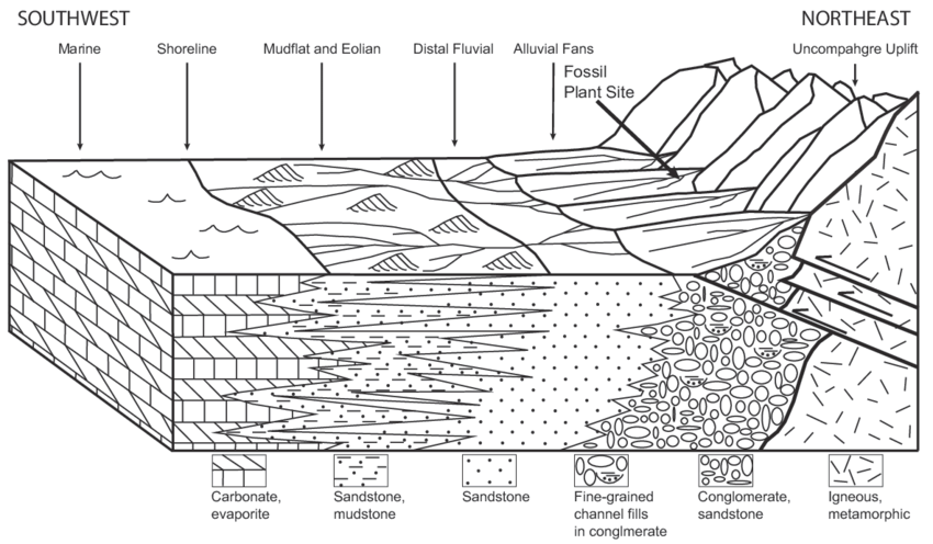 Schematic diagram of the depositional setting of the