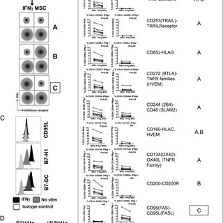 (PDF) IDO-Independent Suppression of T Cell Effector