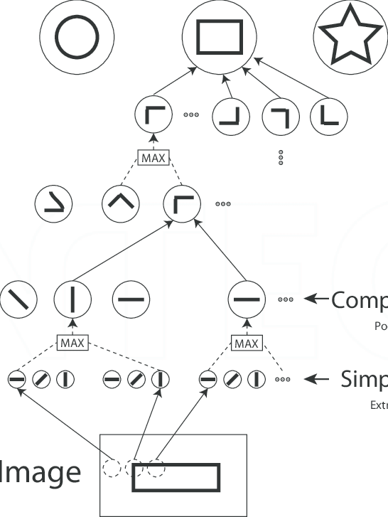 Example of a hierarchical model [51], consisting of