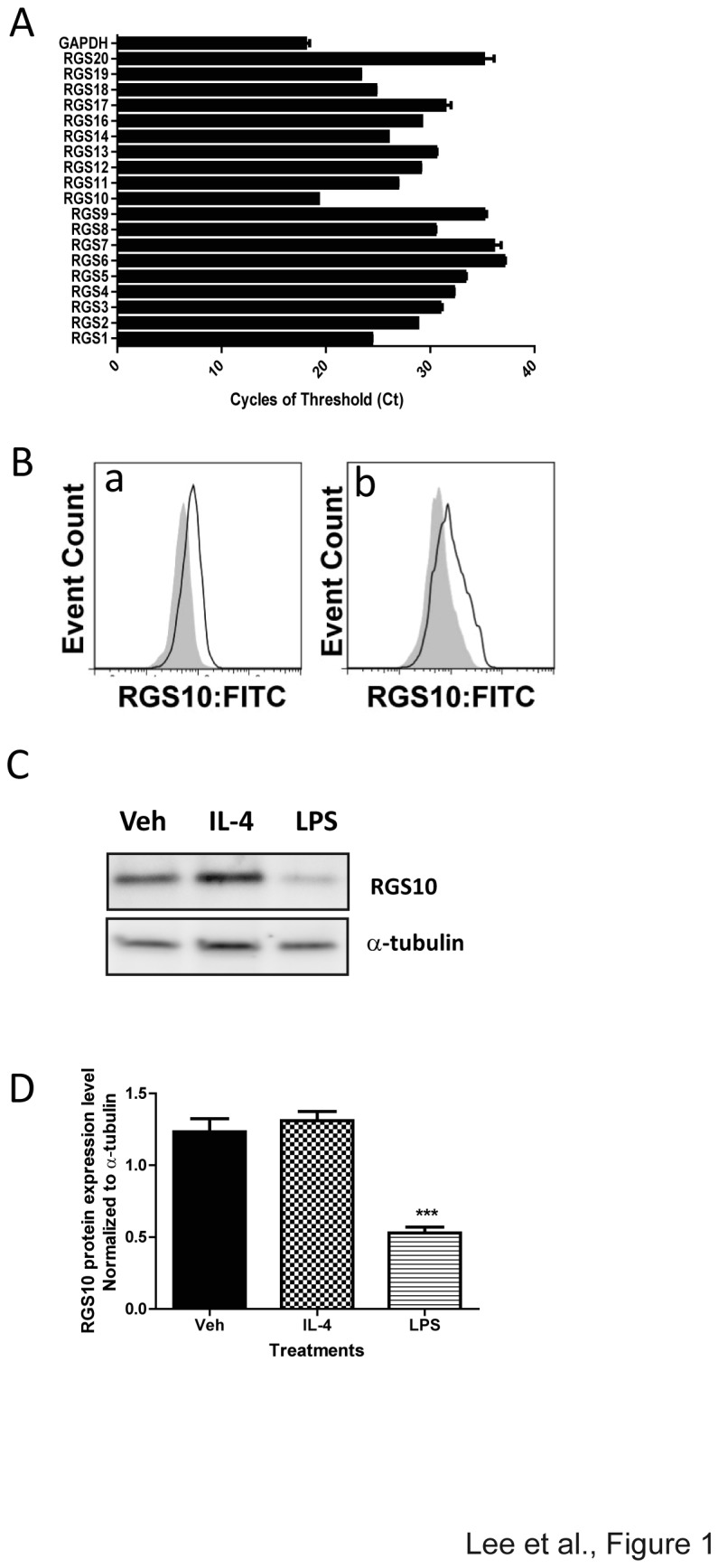 A) RGS mRNA levels in mouse BMDMs were assessed by