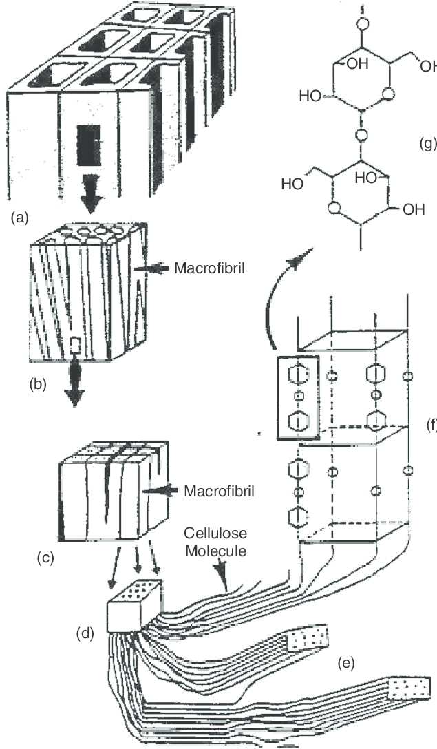 Schematics of wood and cellulose fibers: (a) wood, (b