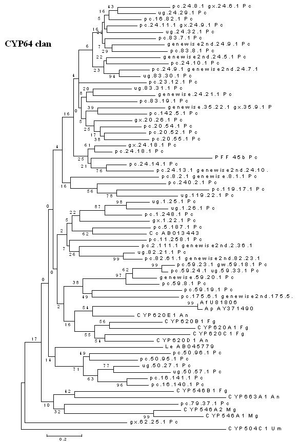 Minimal evolution tree of the fungal CYP64 clan. The