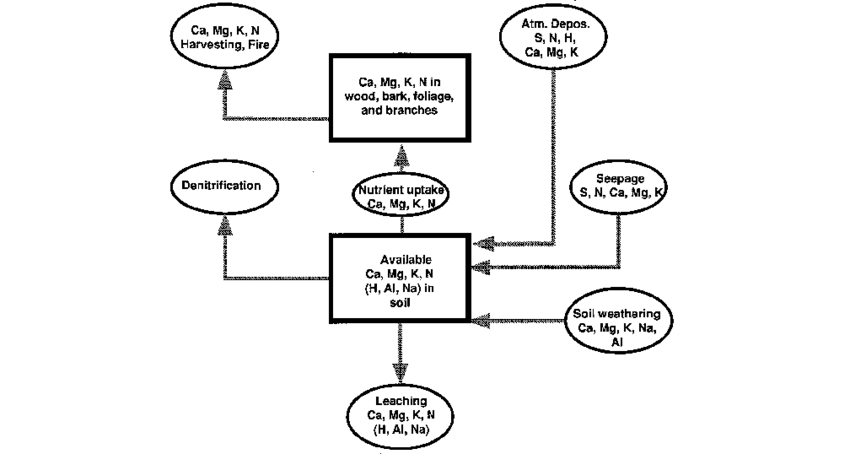 Flow chart for determining mean annual biomass increments
