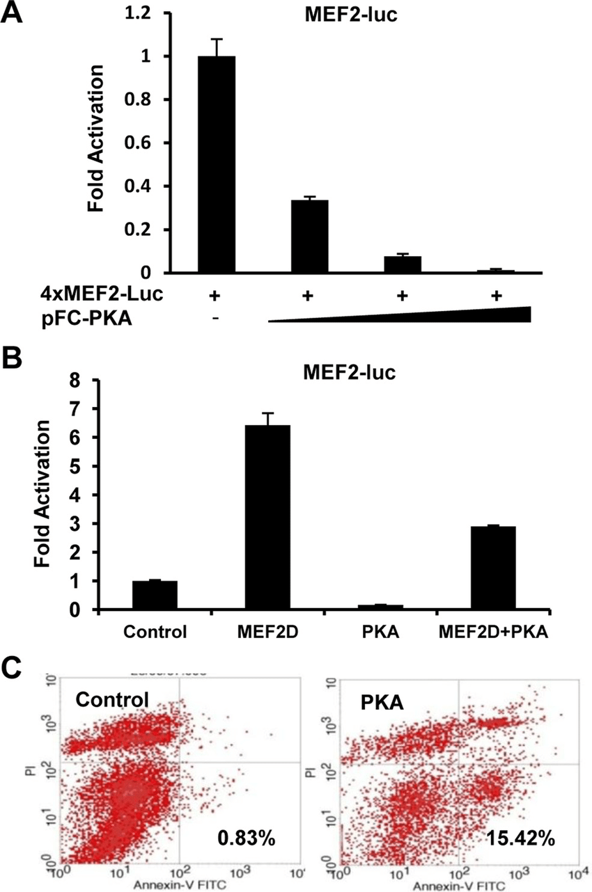 medium resolution of exogenous expression of activated pka suppresses the prosurvival role download scientific diagram