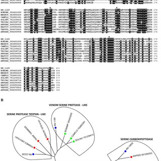 Phylogram of Serine Protease inhibitors from R. neglectus