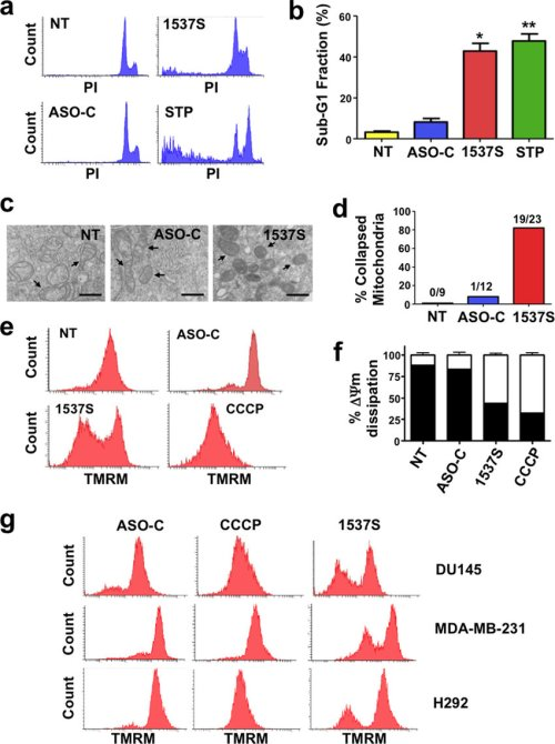 small resolution of mitochondrial and nuclear alterations elicited by ask a ask induces the increase in sub