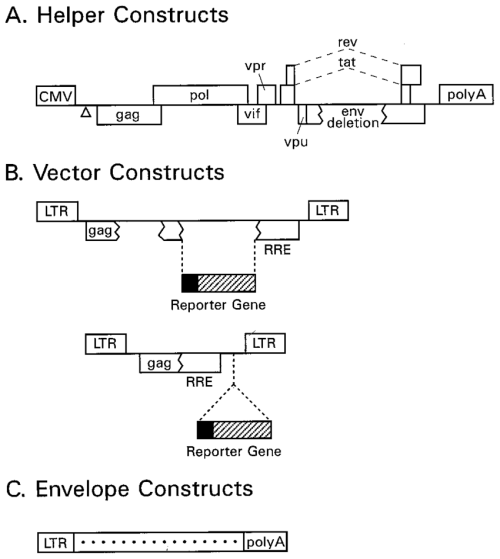 small resolution of components of the hiv 1 packaging system a helper constructs the