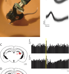 multi site recordings using the ultralight weight hyperdrive a image of a [ 850 x 1221 Pixel ]