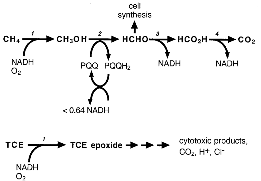 Methane and TCE oxidation pathways in methane-oxidizing