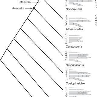 (PDF) A Jurassic ceratosaur from China helps clarify avian