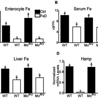 (PDF) Investigation of Iron Metabolism in Mice Expressing