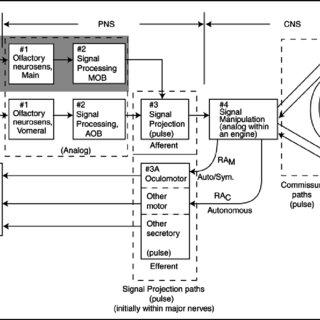 3.2-1 A 2D olfactory wheel & set of preferred single