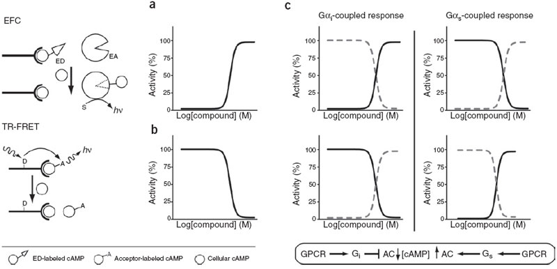 Influence of assay design on the measured biological
