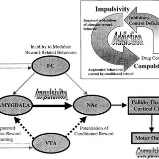 (PDF) Impulsivity resulting from frontostriatal