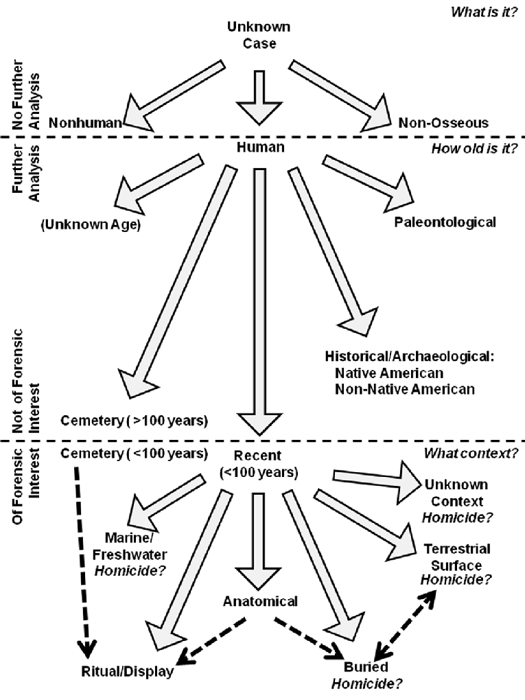 Stages in the analysis of osseous or suspected osseous