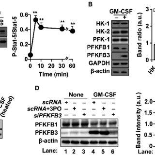 (PDF) GM-CSF Enhances Macrophage Glycolytic Activity In