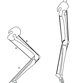 4: Flexion/Extension Motion of (a) Elbow Joint and (b