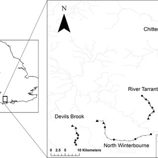 Example of macrophyte-community dynamics in the case of