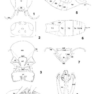 (PDF) Revision of the Nearctic species of the genus