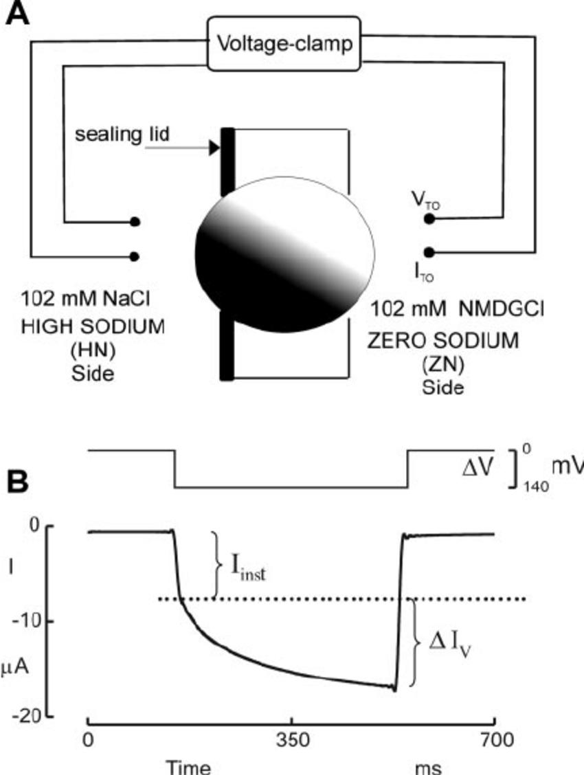 Experimental procedures. A : schematic arrangement of the