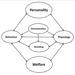 (PDF) Personality Research in Mammalian Farm Animals