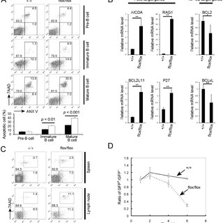 (PDF) The Kinase PDK1 Is Essential for B-Cell Receptor