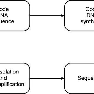 2 Elementary nitrogenous bases (adenine, guanine, cytosine