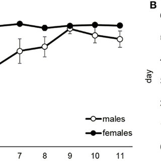 Maintenance of food self-administration in male and female