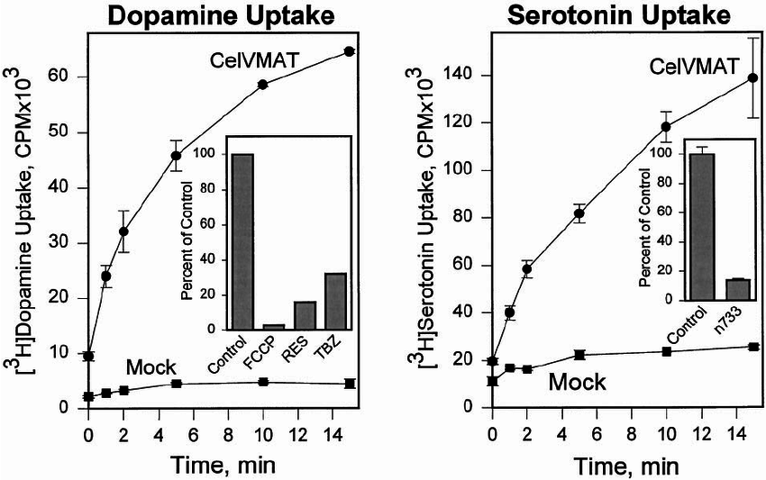 Transport of [ 3 H]dopamine and [ 3 H]serotonin mediated