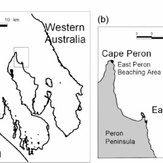 (PDF) Specialization and development of beach hunting, a