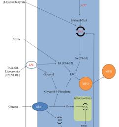 5 biosynthesis of milk fat abbreviations acc acetyl coa download scientific diagram [ 850 x 1190 Pixel ]
