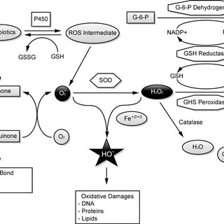 Basic mechanisms of the generation of free radicals and